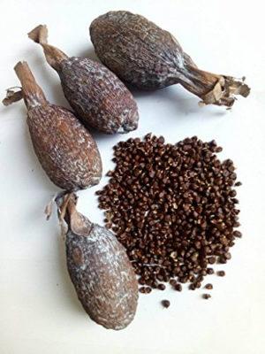 Alligator Pepper Quantity: x1