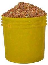 Beans(OLOTU)