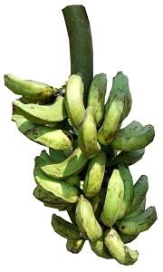 Banana-Unripe Bundle-Yoruba