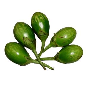 Garden Egg – Green 4 L