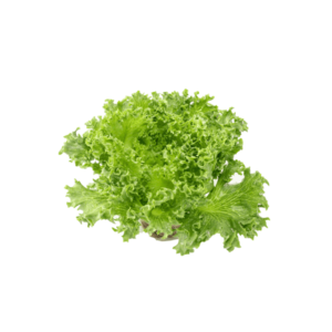 Lettuce - Basket - 1,300